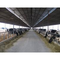Wholesale Pre-engineered Steel Framing Systems Breeding Cow / Horse With Roof Panels from china suppliers