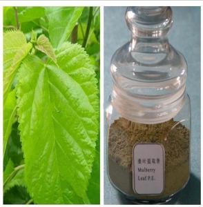Natural Mulberry Leaf Extract Treat Diabetes Mellitus DNJ
