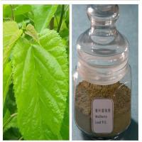 Quality Natural Mulberry Leaf Extract Treat Diabetes Mellitus DNJ for sale