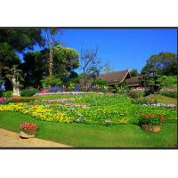 Wholesale Green Landscaping Artificial Grass from china suppliers