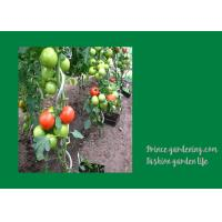 8mm Colorful Spiral Plant Support , Durable Garden Spiral Tomato Stakes