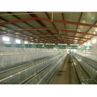 Wholesale Feeding, Drinking, Lighting, Heating, Ventilation, Feed Storage and Transport, Layer Cages from china suppliers