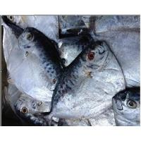 Wholesale Frozen moonfish /Mene Maculata from china suppliers
