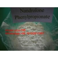 Wholesale Muscle Building Steroids , Nandrolone Phenylpropionate Injectable NPP 100mg/ml from china suppliers