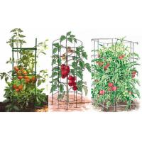 Three type tomato cage supports in round, square or triangle shape made from galvanized or green PVC coated steel
