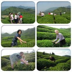 Lin'an Dayang Tea Industry Co., Ltd