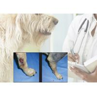 Wholesale 15 W Laser Canine Rehabilitation Equipment , Laser Therapy For Arthritis In Dogs from china suppliers