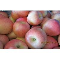 Wholesale Nutritional Round Fresh Fuji Apple Contains Vitamin B6 , Pome Fruit from china suppliers