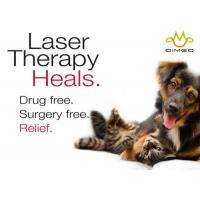 Wholesale Veterinary Laser therapy for treating post surgical pain and many acute and chronic conditions from china suppliers