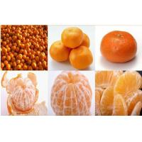 Wholesale Sweet Baby Fresh Mandarin Oranges from china suppliers