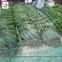 Buy cheap UVG indoor cheap plastic palm tree leaves green fake leaves wholesale for party decoration PTR062 from wholesalers