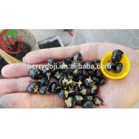 Hot sale Black goji berries large size