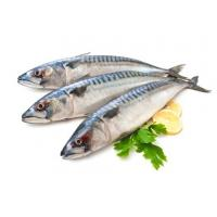 Wholesale Land Frozen Whole Round Indian Mackerel Fish With Good Quality for Sale. from china suppliers