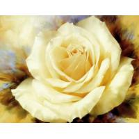 Wholesale Home Decoration DIY  Oil Painting By Number Home Wall Kids Room Decor 40x50cm Flower from china suppliers