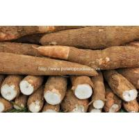Wholesale Automatic Cassava Flour Production Line for Sale from china suppliers