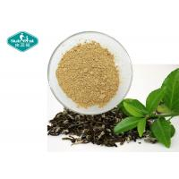 98% Polyphenols Natural Botanical Extracts / Dehydrated Green Tea Extract With Antioxidants