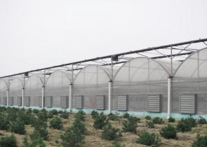 Wholesale Anti Wind Climate Control Lettuces Multi Tunnel Greenhouse from china suppliers