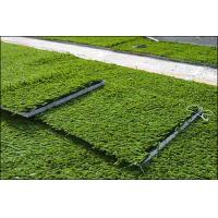 Wholesale 60mm Artificial Sports Turf / artificial grass turf , custom color from china suppliers