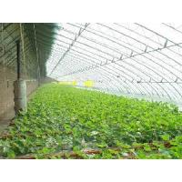 Wholesale Polycarbonate Roofing Sheets from china suppliers