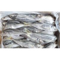 Wholesale New Arrivial Good Reputation Brands of Frozen Fish Horse Mackerel Wholesale Price. from china suppliers