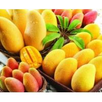 Wholesale fruit powder mango juice drink powder factory price/high quality mango seed powder factory from china suppliers