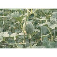 Wholesale PEA & BEAN NET ( HIGH QUALITY ISO 9001) from china suppliers