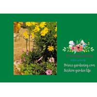 """Wholesale Garden Metal Curved Plant Support 18"""" Tall With A 7"""" Curved Arm from china suppliers"""