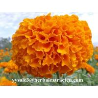 Buy cheap Marigold P.E ,  Lutein  10% 20% 80%  natural colorant , antioxidant, Chinese exporter, CAS NO.: 127-40-2, eyes protect from wholesalers