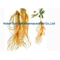 Wholesale Light Yellow Herbal Extract Powder , Medical Grade Panax Ginseng Root Extract from china suppliers