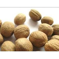 Wholesale Nutmeg extract, Myristica fragrans Extract, 10:1 TLC, natural flavor, manufacturer, Shaanxi Yongyuan Bio-Tech from china suppliers