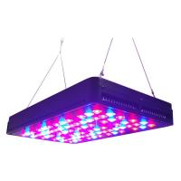 Wholesale Cidly 5W led grow lights hydroponics red blue LEDs contorl separately from china suppliers