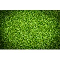 Wholesale Putting green artificial turf from china suppliers