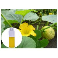 Wholesale Cold Pressed Pumpkin Oil For Hair Growth , Pumpkin Essential Oil Prevent Prostate Diseases from china suppliers