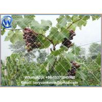 Wholesale HDPE Protect Fruit Plant Garden Bird control Netting-Green from china suppliers
