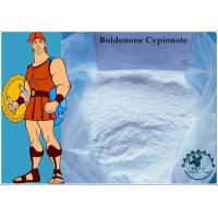 Wholesale 99% Body-building Muscle Growth Boldenone Cypionate CAS:106505-90-2 White Powder from china suppliers