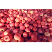 Wholesale Juicy Suitable Sour / Sweet Nutrition Fuji Apple , Red Delicious Apples, crispy, unique flavor from china suppliers
