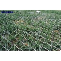 Wholesale high tensile steel wire Chain link mesh for Slope protection reinforce from china suppliers