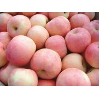 Wholesale Nutritional Value Sweet Red Fuji Apple Containing Sugars , Dietary Fiber from china suppliers