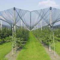 Wholesale Anti-Hail Net for Trees from china suppliers