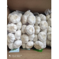 Wholesale Natural China Fresh garlic  Pure White  normal white garlic from china suppliers