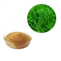 Wholesale Brown Color Rosemary Antioxidant Extract Powder Leaf Part Natural Herb Extract from china suppliers