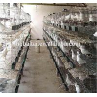 Quality pigeon products with best price and high quality for sale