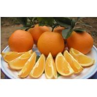 Quality Vitamin C Fresh Navel Orange Seedless Contains Zinc , Protein For Long Time Stored, Smooth fruit surface for sale