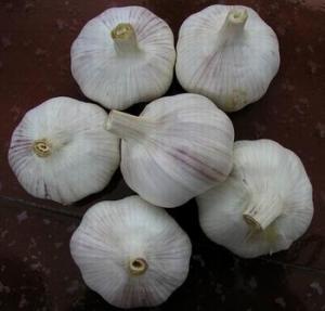 Buy cheap Fresh Pure White Garlic from wholesalers