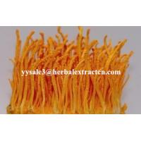 Wholesale Cordyceps Sinensis Extract, Кордицепс Sinensis Экстракт, Enhance immunity, Рейши Экстракт гриба from china suppliers