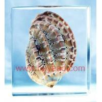 China China seashell amber resin crafts,office gifts,business gifts,Corporate Gifts on sale