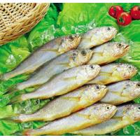 Quality new catching frozen fish whole round yellow croaker from China on sale. for sale