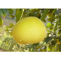 Wholesale Naringin Natural Health Supplements CAS 10236-47-2 15-98% Natural Citrus Grandis Osbeck Extract from china suppliers