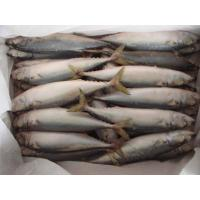 Wholesale NEW LANDING FROZEN FISH PACIFIC MACKEREL SEA FROZEN 150-250G. from china suppliers
