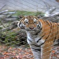 High Tensile Stainess Steel Cable Mesh For Tiger / Monkey Enclosure